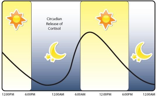 cortisol sleep chart